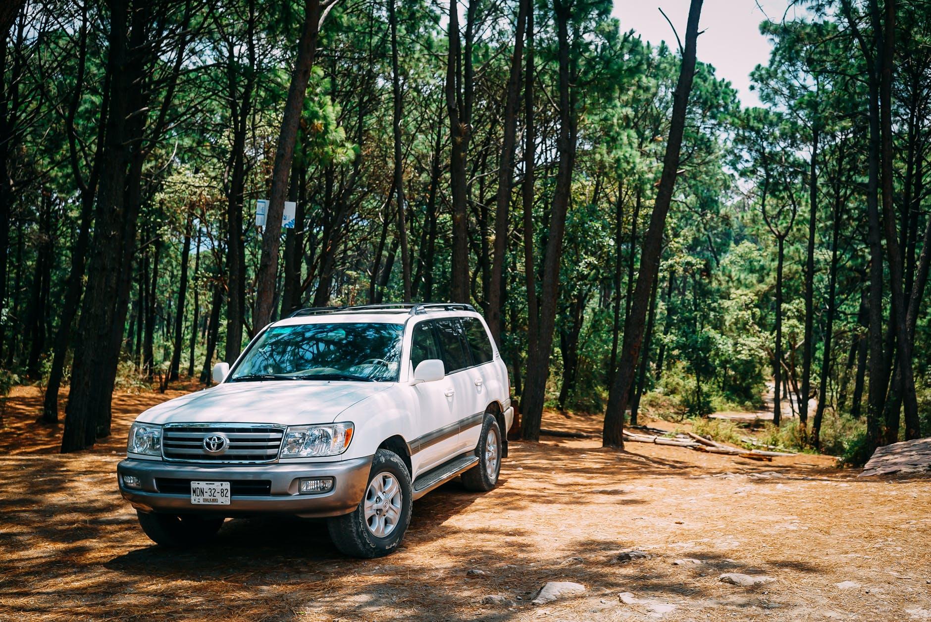 Wjazd i parkowanie w lesie – kiedy można, kiedy nie?